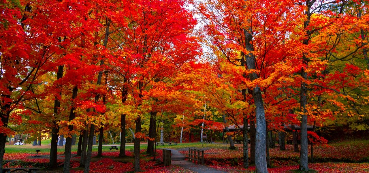 Best-time-to-visit-Maine-for-foliage