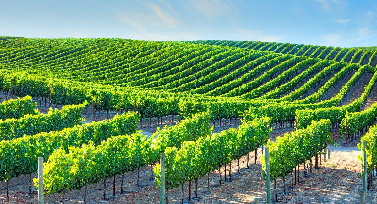 walking tours - things to do in Napa Valley